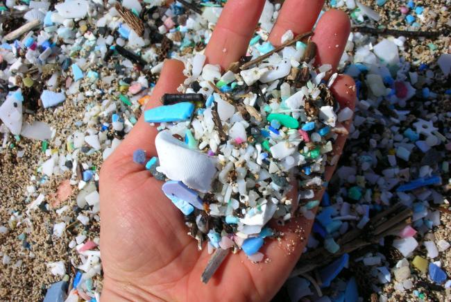 Pollution Des Microplastiques : Lettre Ouverte à François De Rugy